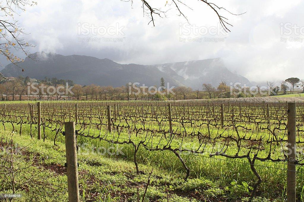 Vineyards in sunshine stock photo