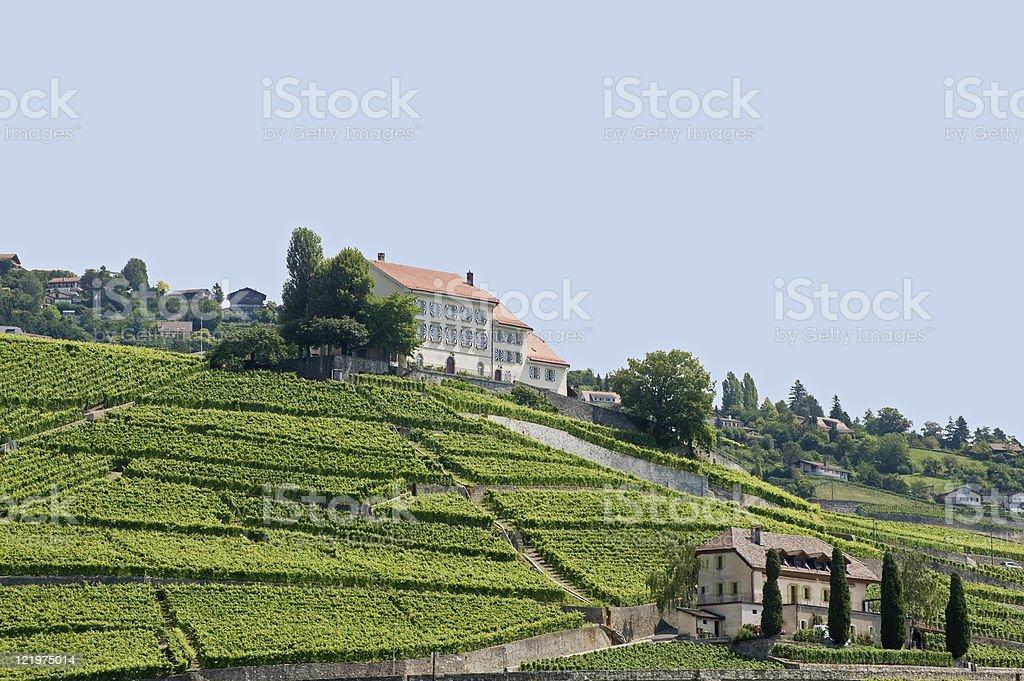 Vineyards in Switzerland on the Lake of Geneva (Vaud) royalty-free stock photo