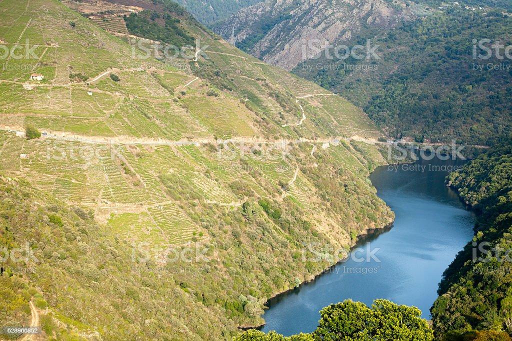 Vineyards in terraced fields, river Sil canyon, Ribeira Sacra, Galicia.. stock photo