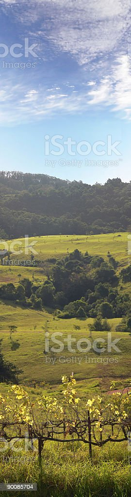 Vineyards in the hills of Berry, New South Wales Australia stock photo