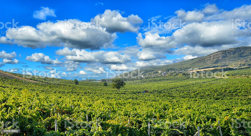 Vineyards in the mountains stock photo