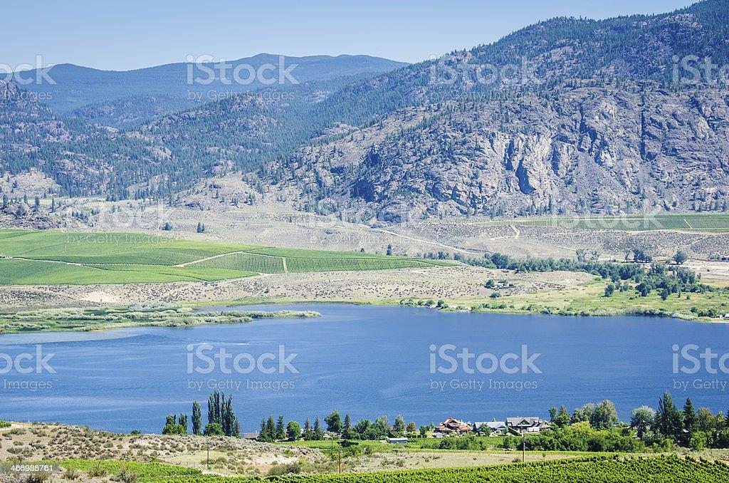 Vineyards in the Okanagan Valley stock photo