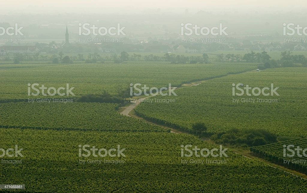 Vineyards in the Palatinate royalty-free stock photo