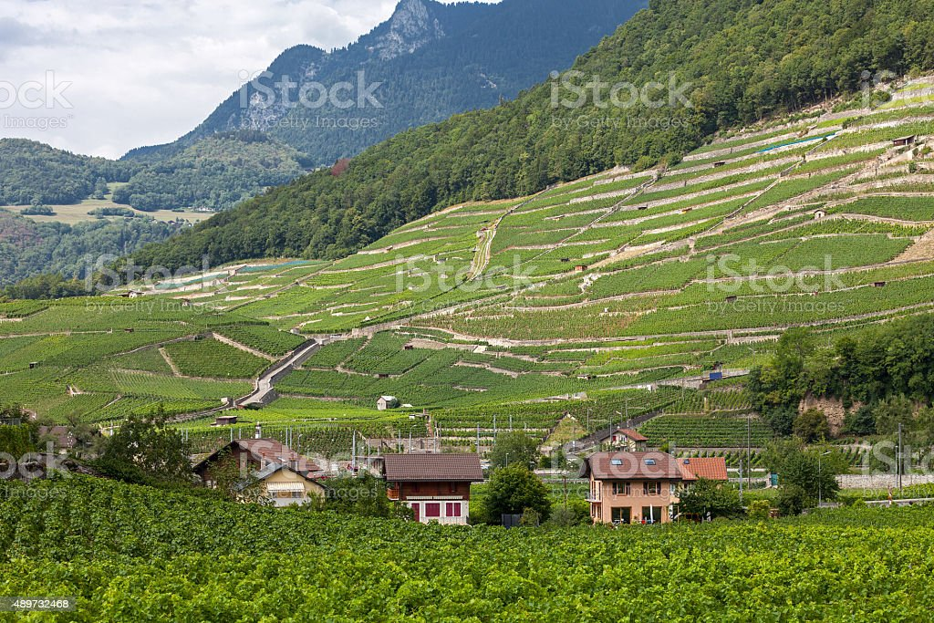 Vineyards in the Vaud Canton stock photo