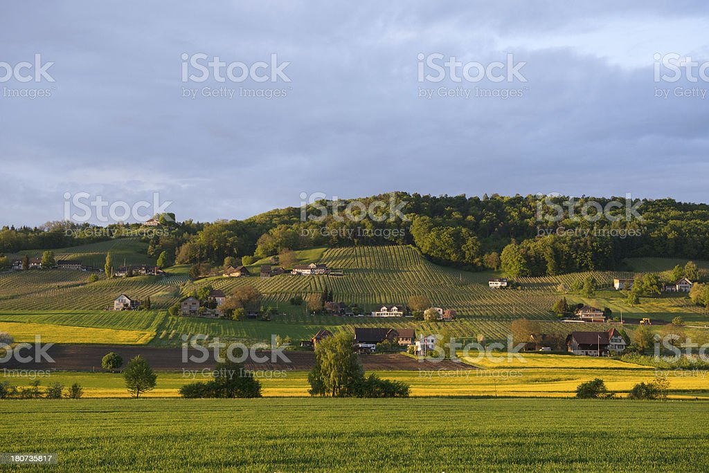 Vineyards in Weinfelden stock photo