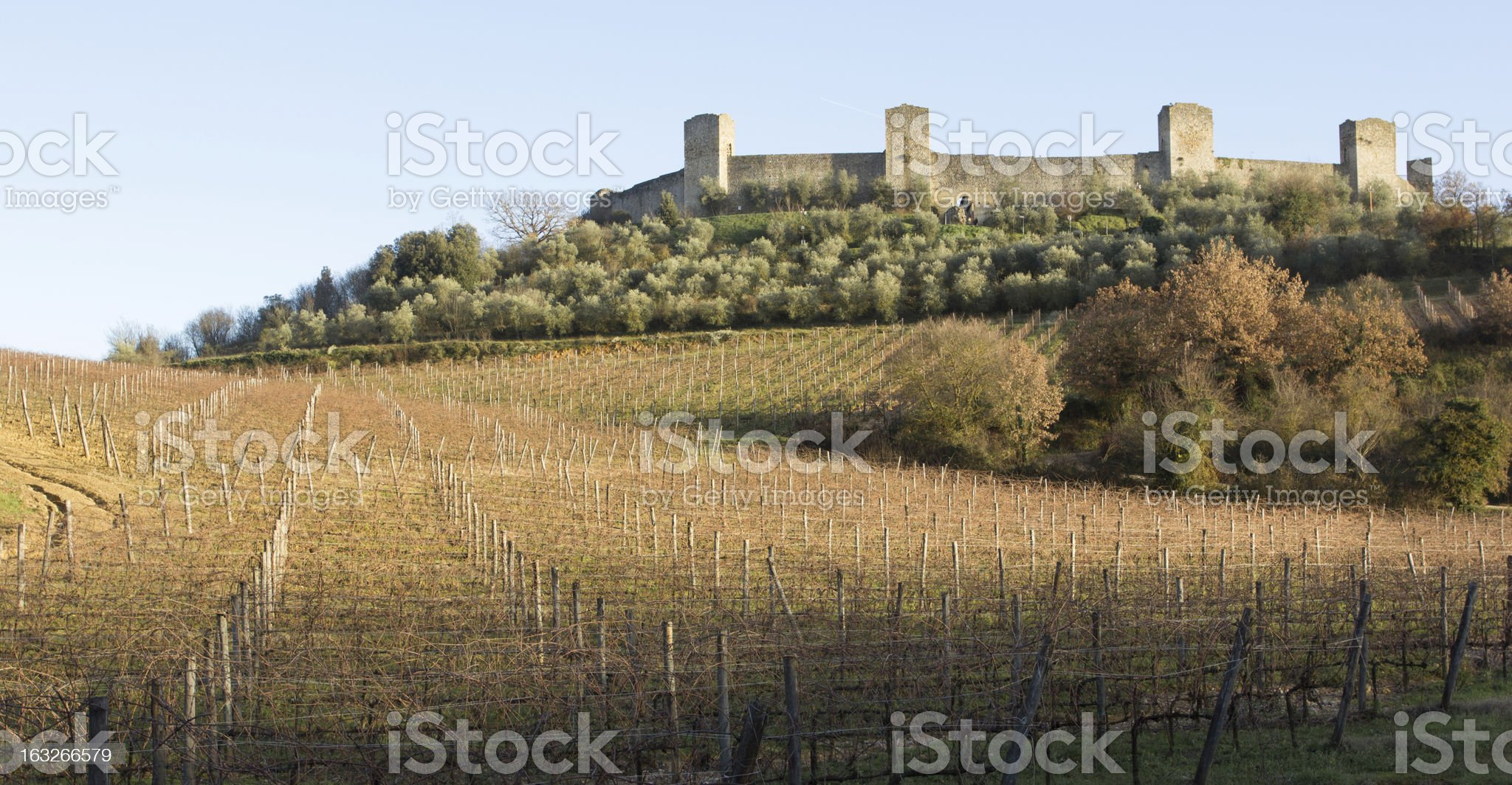 Vineyards in winter close to monteriggioni, Tuscany, Italy royalty-free stock photo