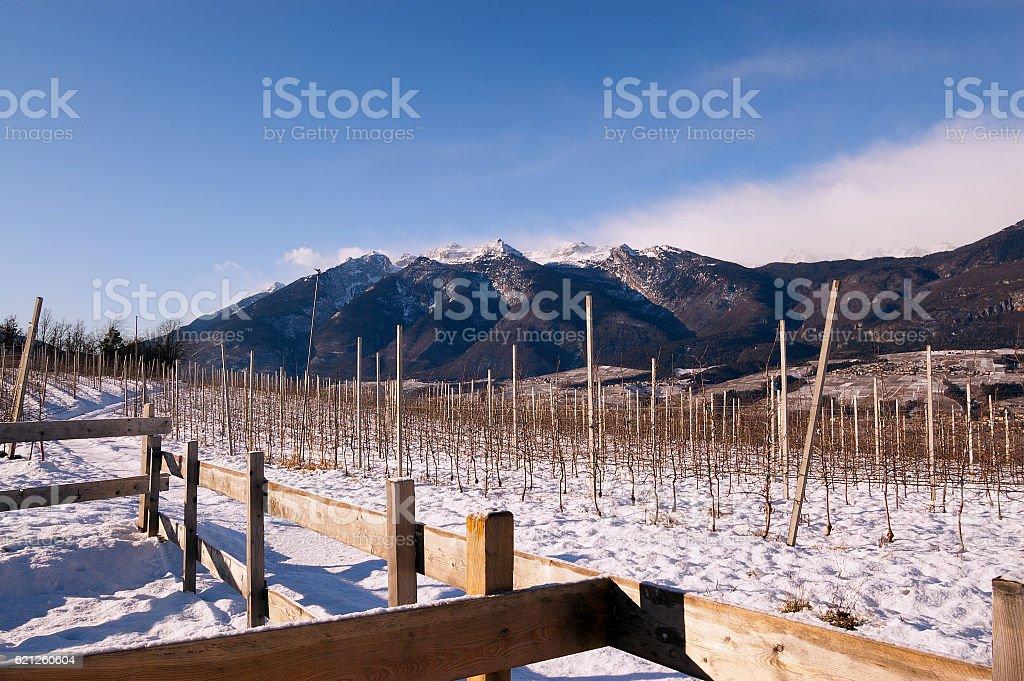 Vineyards in Winter - Val di Non Trentino stock photo