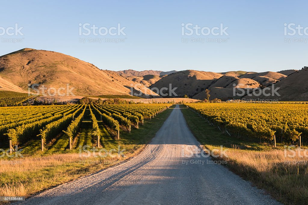 vineyards in Wither Hills, New Zealand stock photo