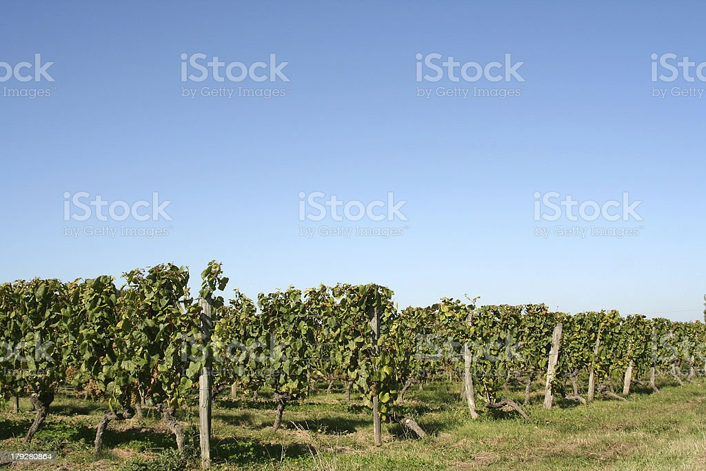 Vineyards, Indre Loire, France royalty-free stock photo