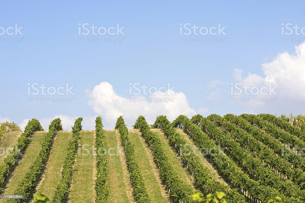 Vineyards landscape stock photo
