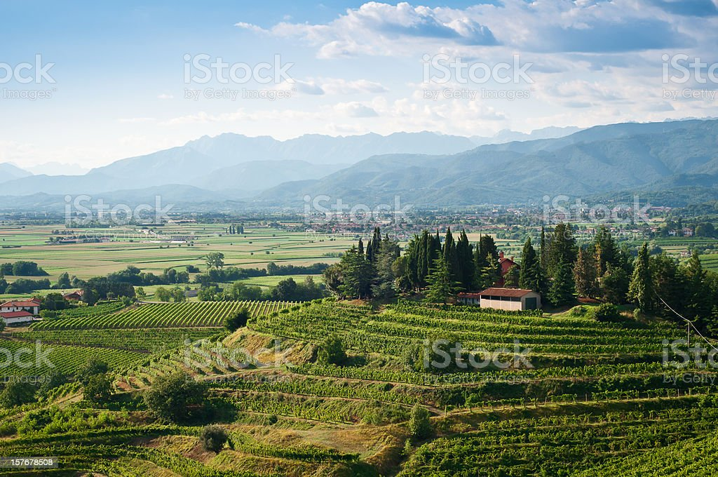 Vineyards landscape view royalty-free stock photo