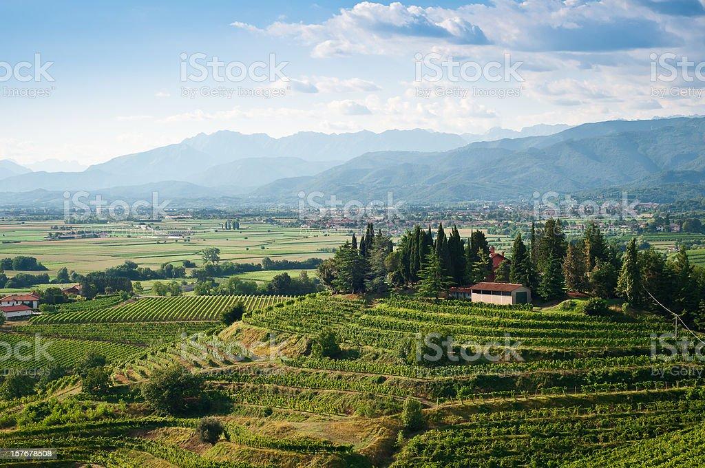 Vineyards landscape view stock photo
