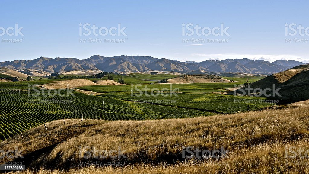 Vineyards - Marlborough, New Zealand royalty-free stock photo