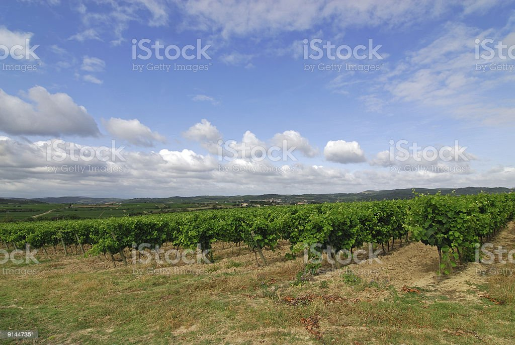 Vineyards near Carcassonne (Languedoc-Roussillon, France) royalty-free stock photo