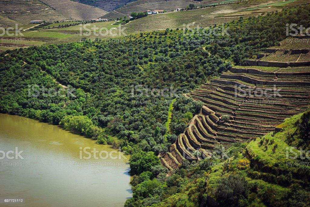Vineyards near Duoro river in Portugal stock photo