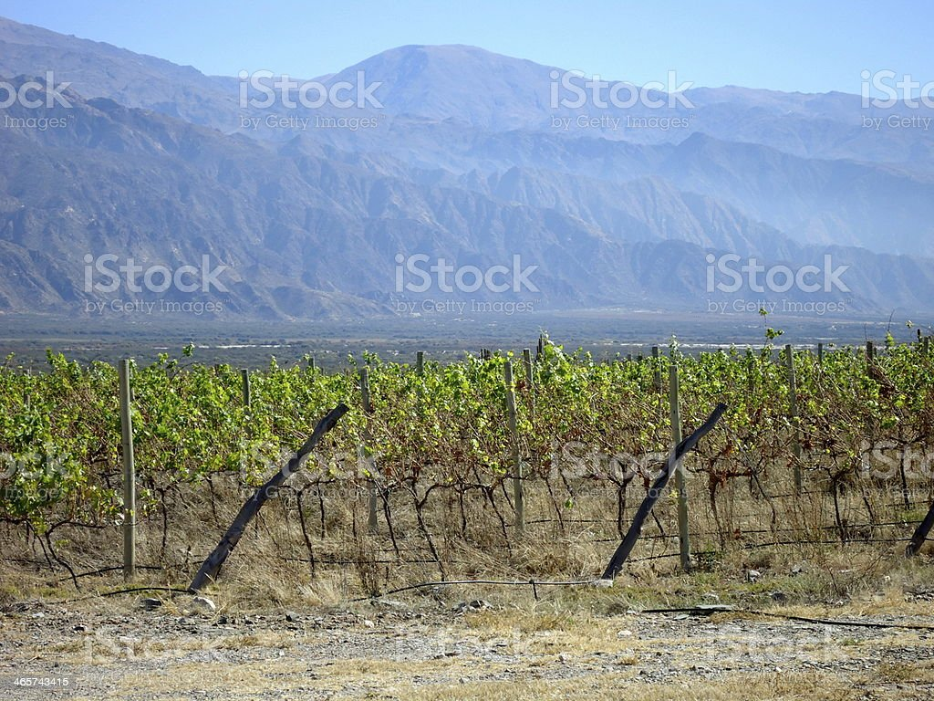 Vineyards of Cafayate stock photo