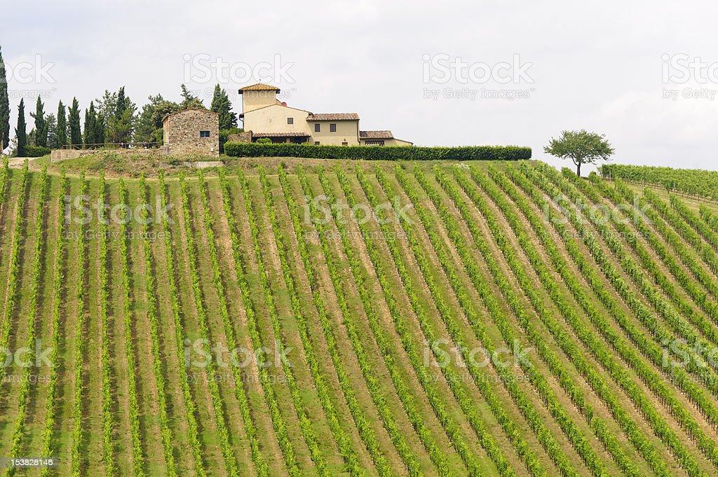 VIneyards of Chianti (Tuscany) royalty-free stock photo