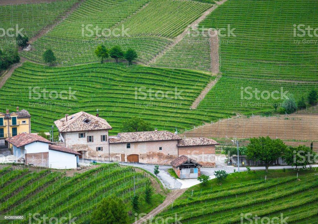 Vineyards of Langhe, Piedmont stock photo