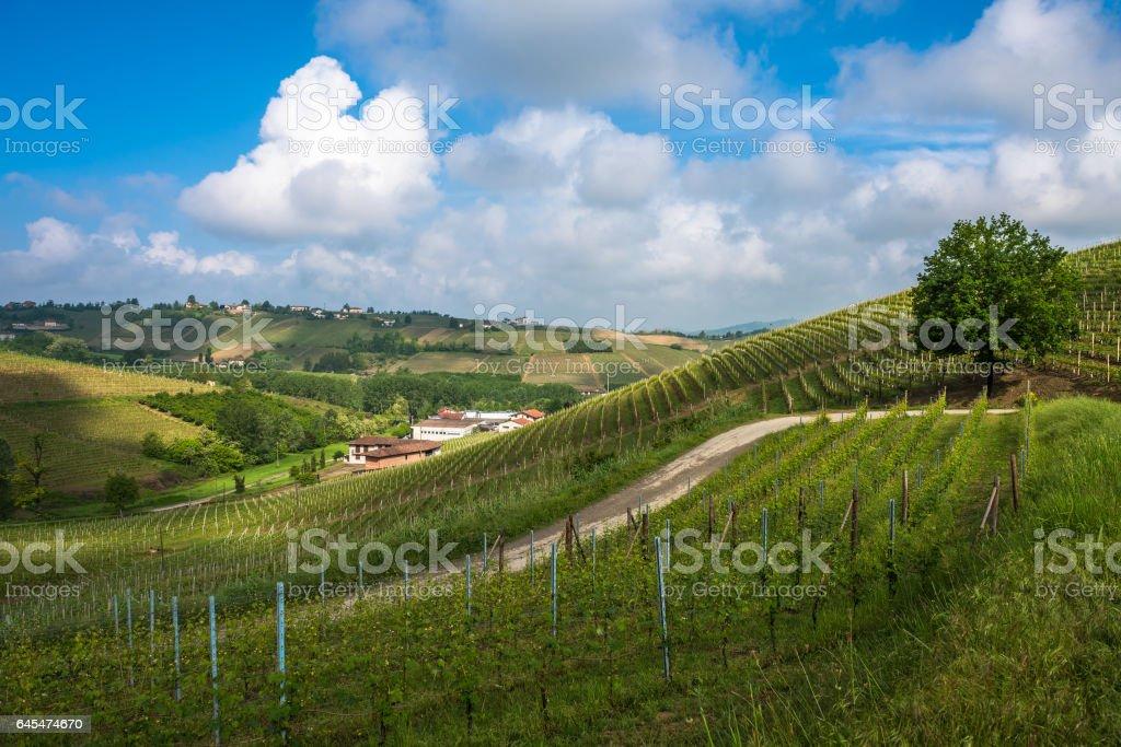 Vineyards of Langhe, Piedmont, UNESCO world heritage stock photo