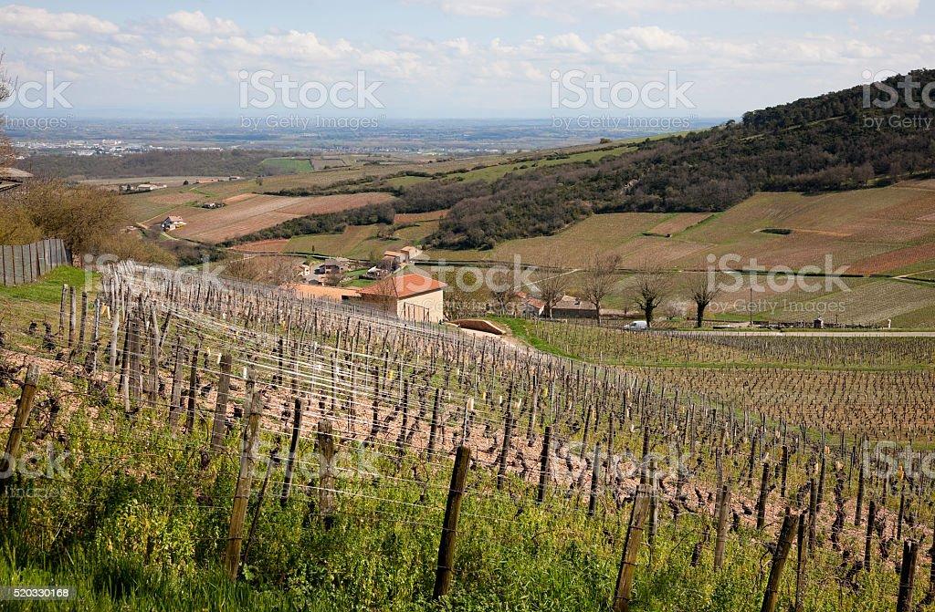Vineyards of Macon, France in April stock photo