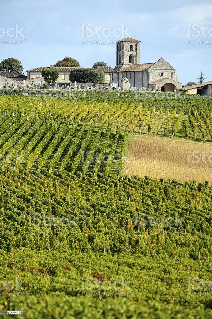 Vineyards of Montagne-Saint-Emilion, Bordeaux Vineyards stock photo