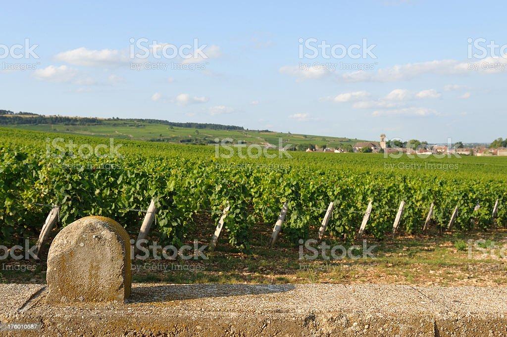 vineyards of Pommard, Burgundy stock photo