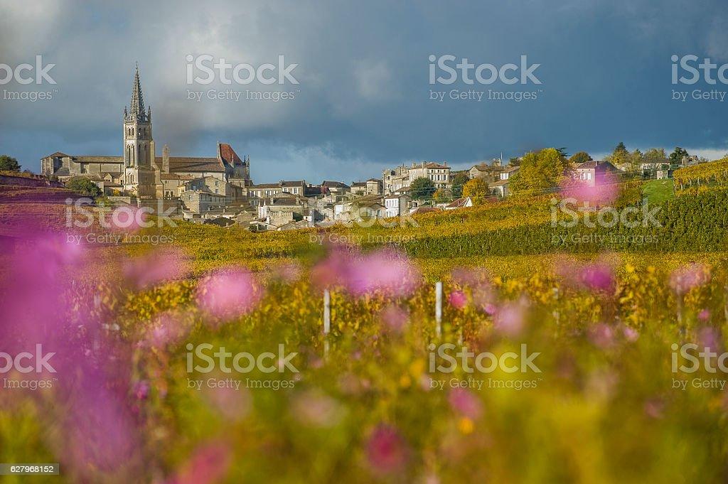 Vineyards of Saint Emilion, Bordeaux, France stock photo