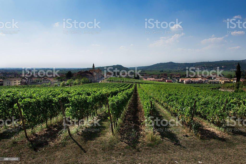 Vineyards of Soave in Veneto Italy stock photo