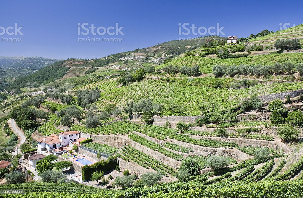 Vineyards of the Douro Valley royalty-free stock photo
