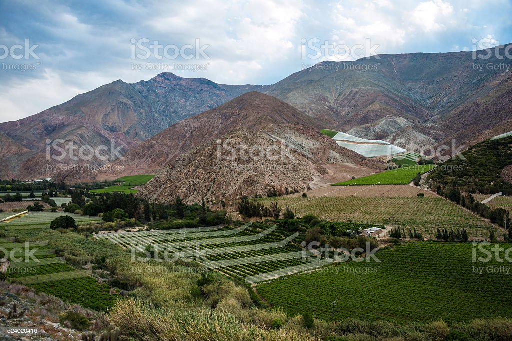 Vineyards of the Elqui Valley, Andes part of Atacama, Chile stock photo