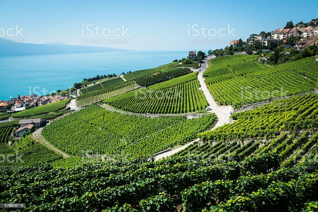 Vineyards of the Lavaux region over lake Leman stock photo