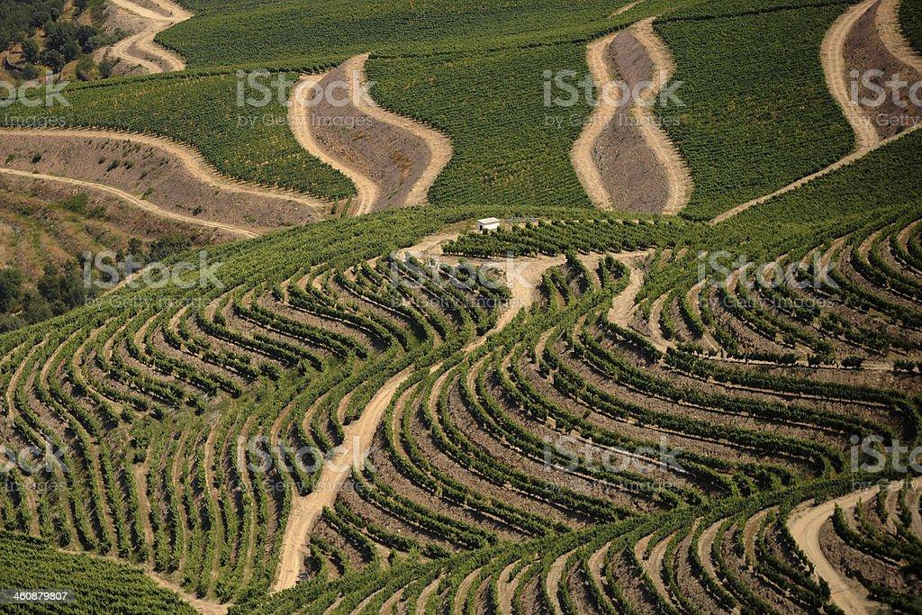 Vineyards of the Port Wine / Vinhas do Douro stock photo