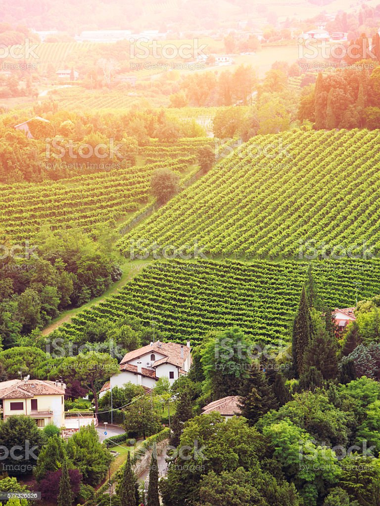 vineyards of the Veneto valleys stock photo