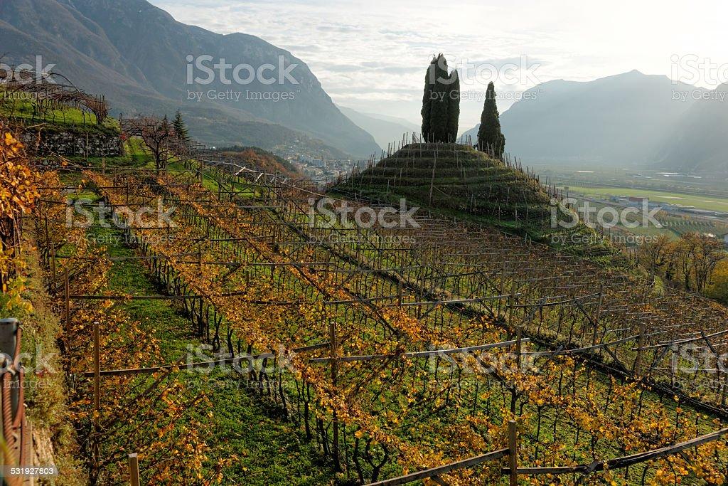 Vineyards of Trentino, Italy stock photo