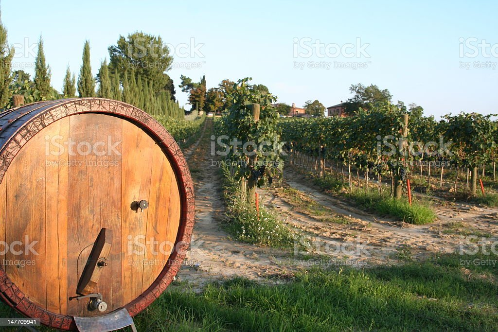 Vineyards of Tuscany royalty-free stock photo