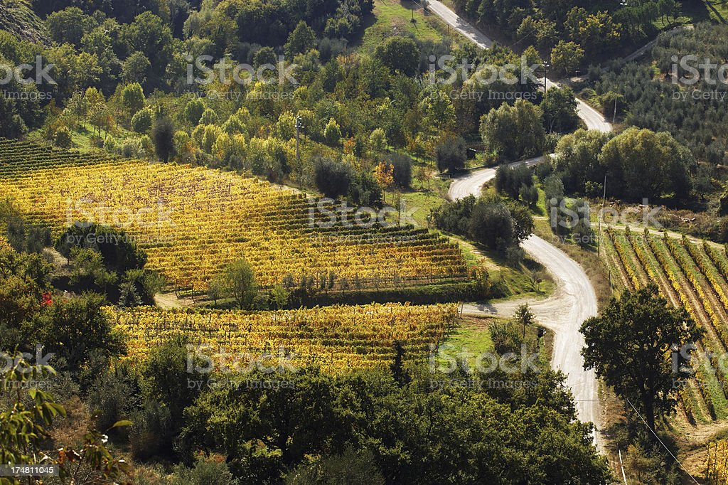 vineyards, olive trees and winding road royalty-free stock photo