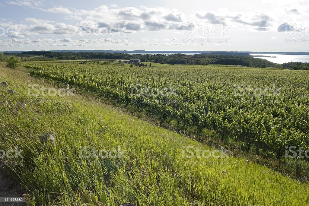 Vineyards on Mission Point, Traverse City MI stock photo