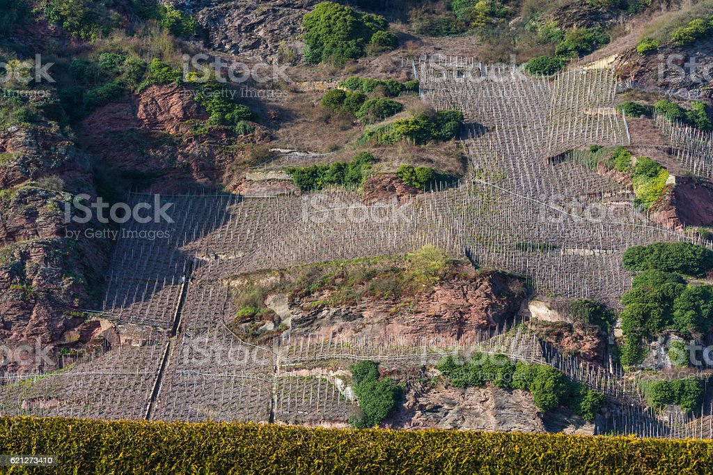 Vineyards on the Mosel river in spring. stock photo