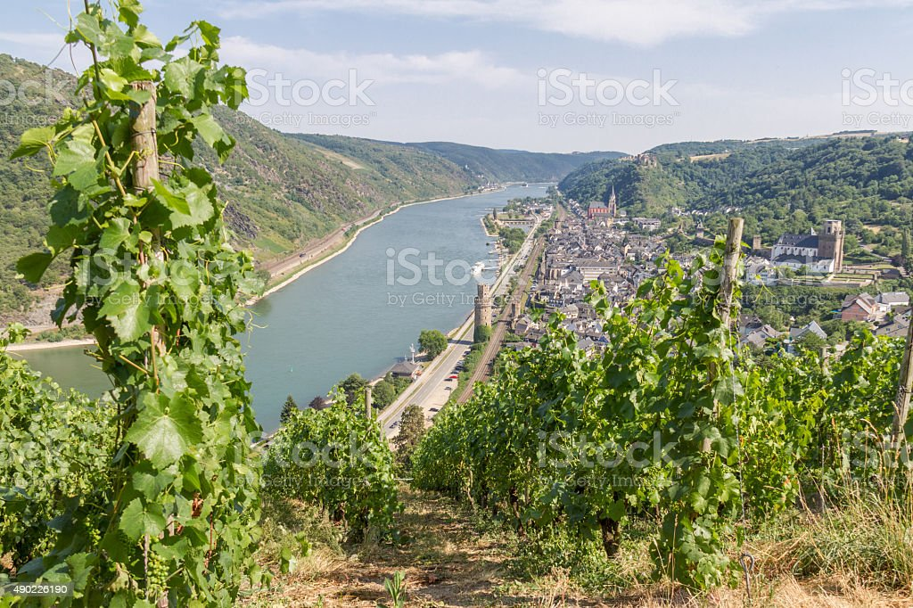 Vineyards on the slopes of river Rhine above Oberwesel stock photo
