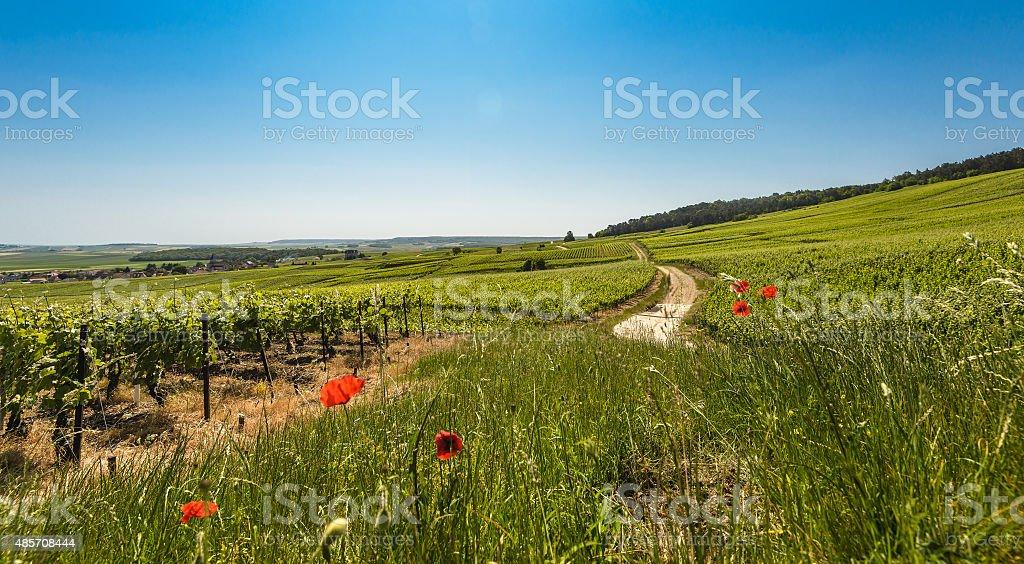 Vineyards stock photo