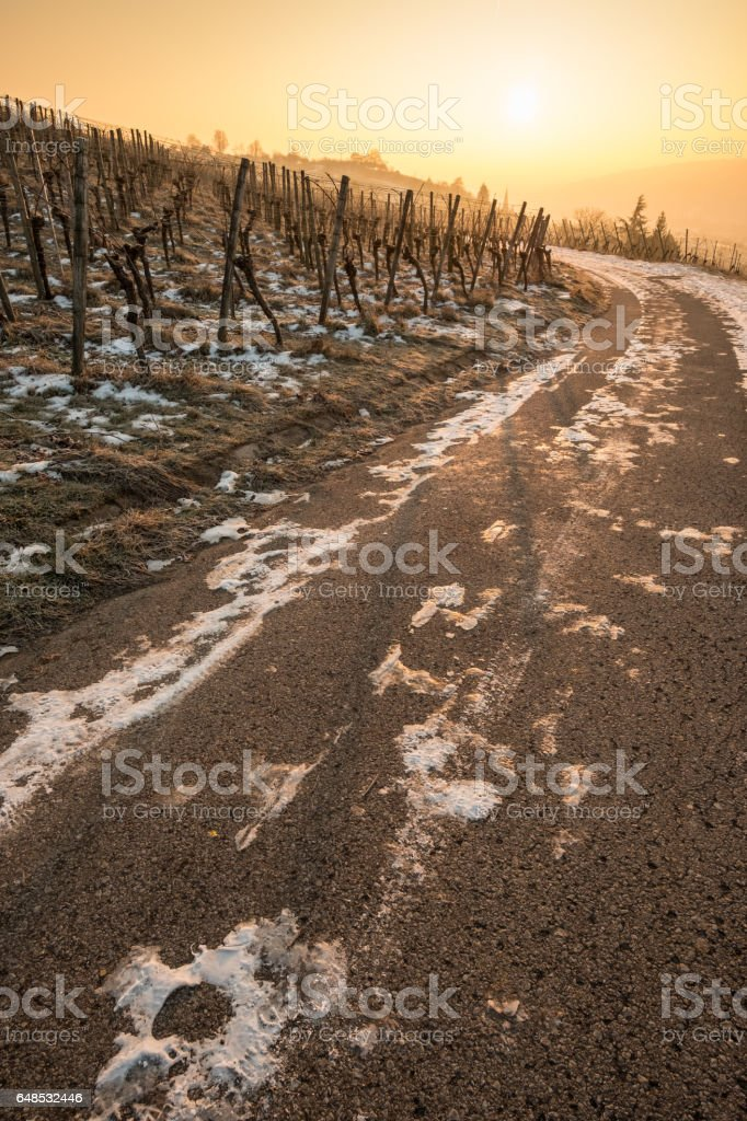 Vineyare in winter with snow and sun stock photo
