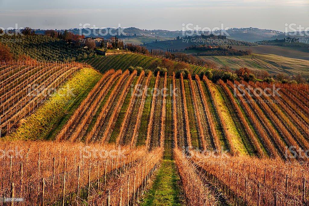 Vineyeard in Chianti stock photo