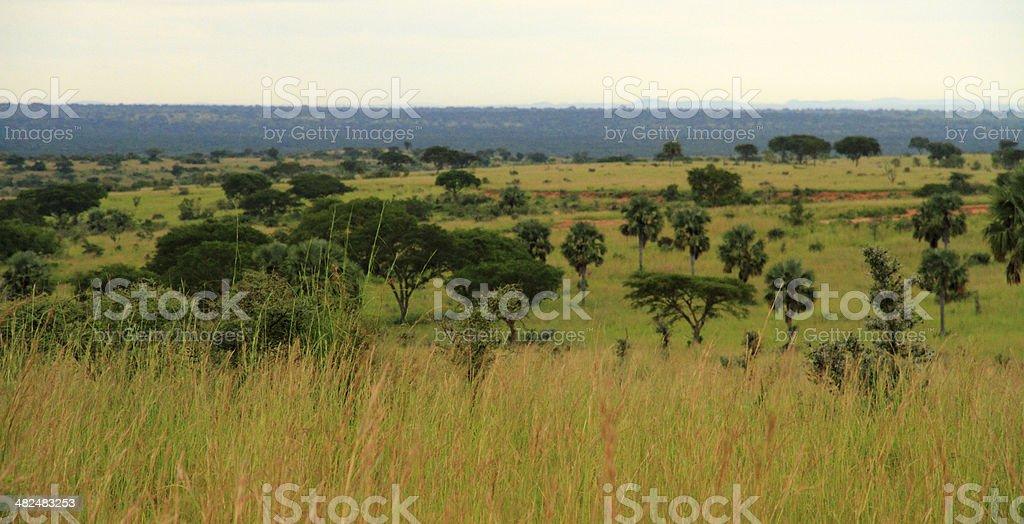 Vintage African Landscape stock photo