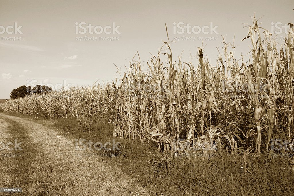 Vintage agriculture royalty-free stock photo
