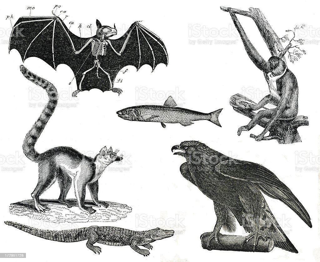 Vintage animals collection vol V stock photo