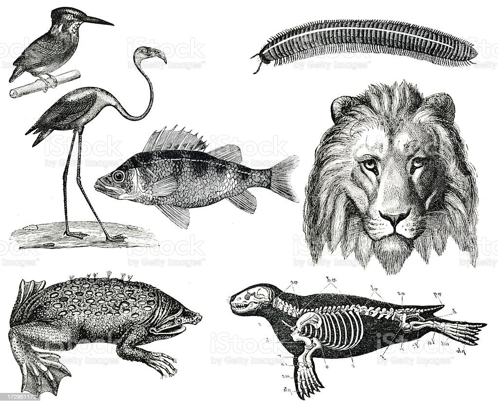 Vintage animals collection vol VIII stock photo
