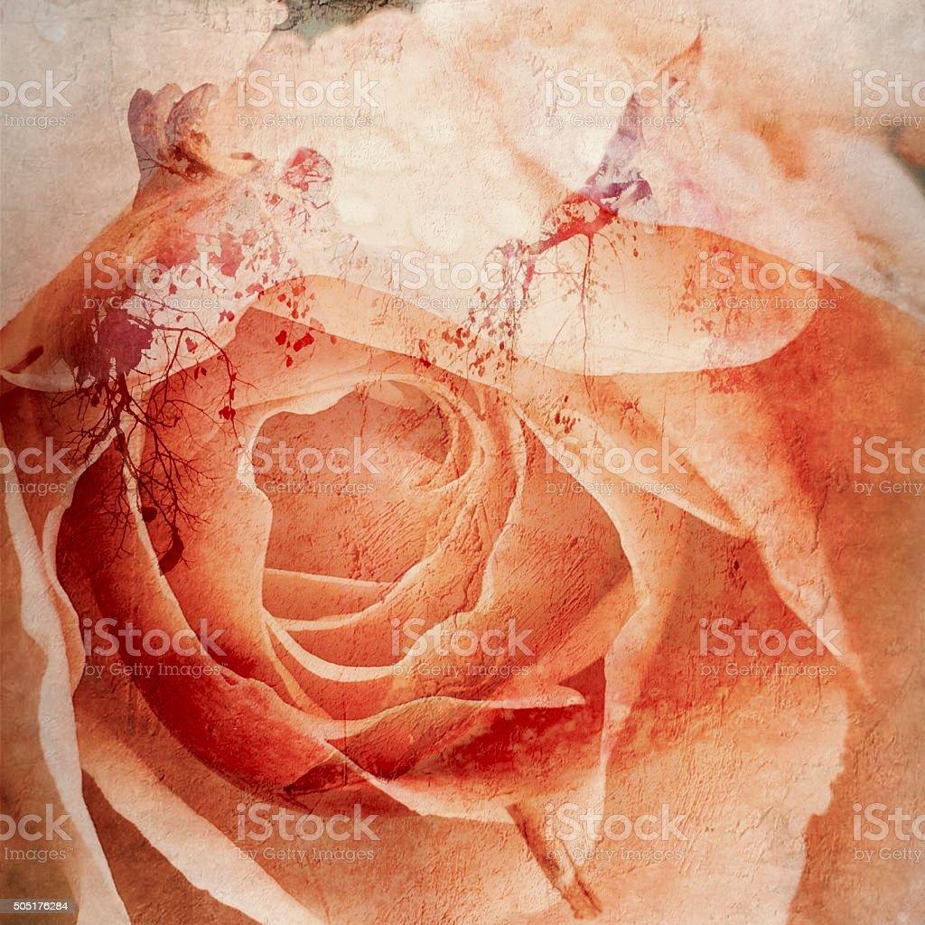 Vintage Apricot Rose stock photo