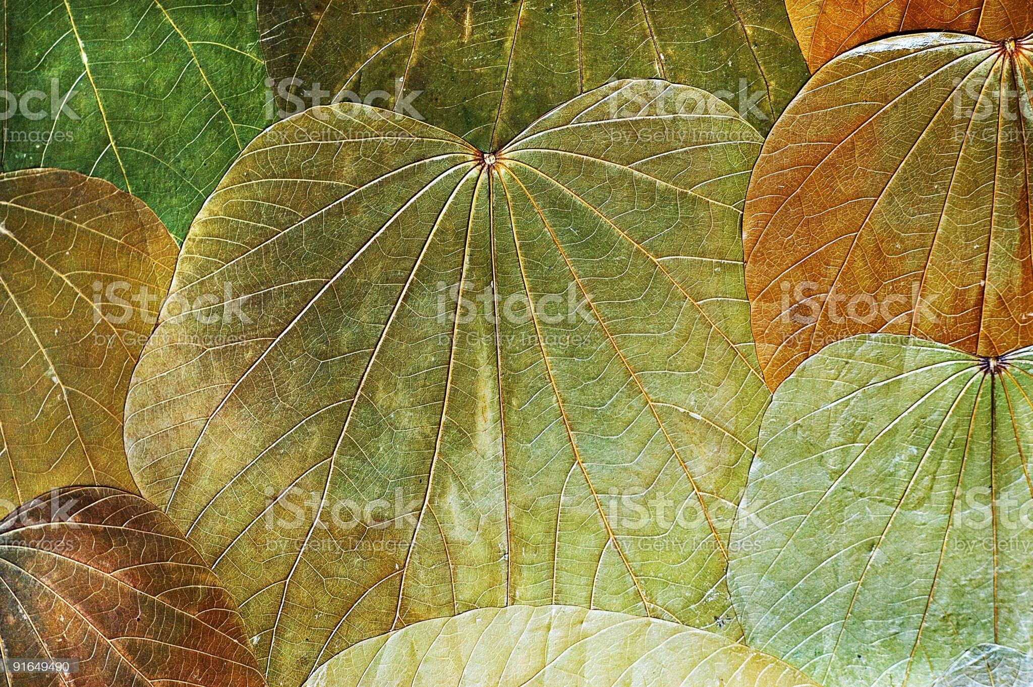 vintage background natural leafs royalty-free stock photo