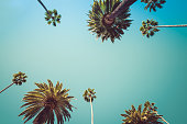 Vintage Beverly Hills Los Angeles Palm Trees