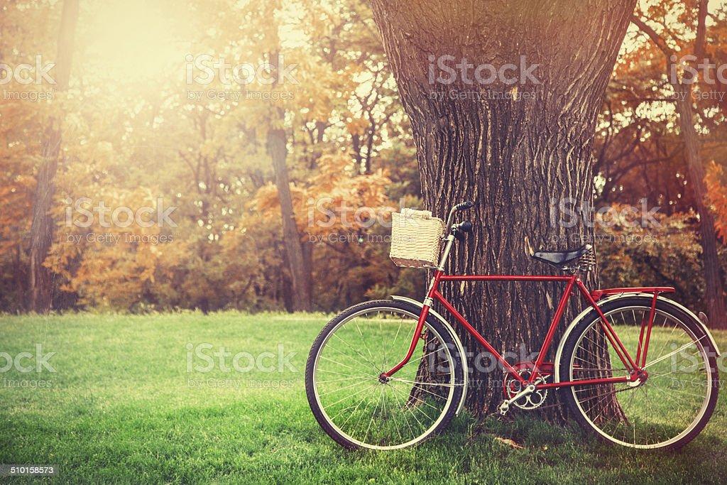 Vintage bicycle waiting near tree stock photo